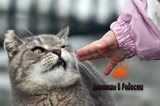 Как перевоспитать агрессивную кошку