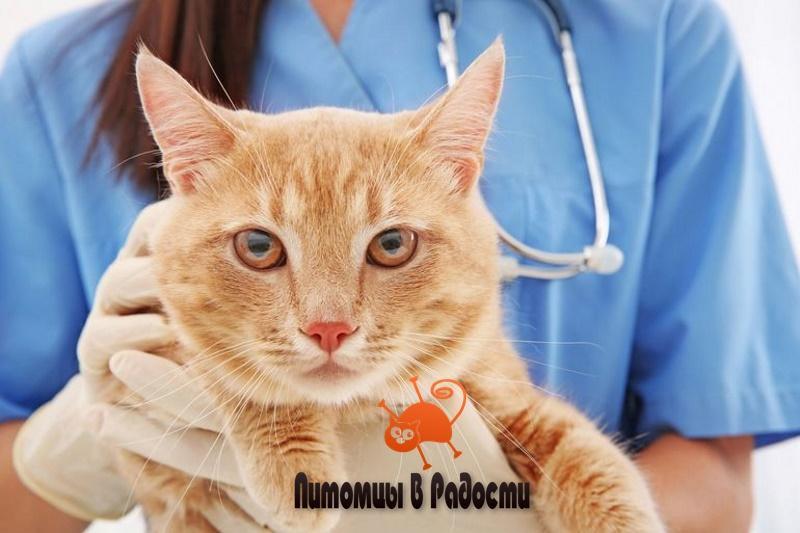 ТОП 8 распространенных болезней кошек