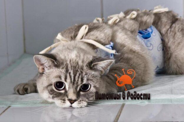 Стерилизация кошки. Способы и риски