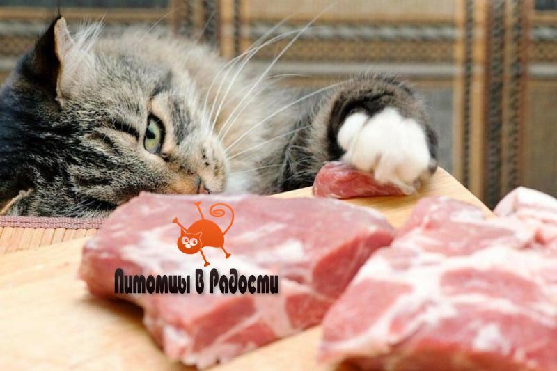 Кошка ворует со стола - как отучить