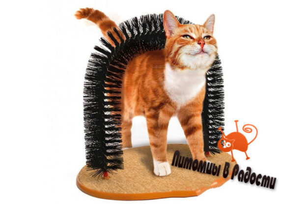 Полезные вещи для кошки, которыми стоит обзавестись