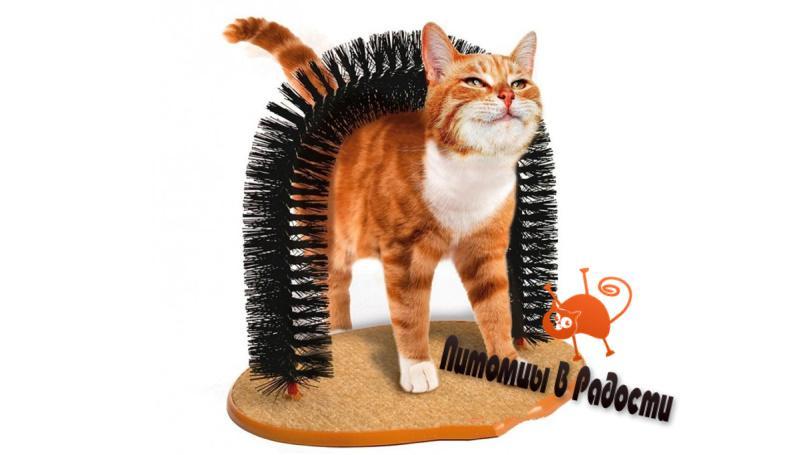 Полезные вещи для кошки
