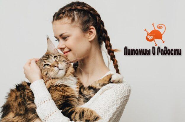Как сделать жизнь кошки счастливой: полезные советы