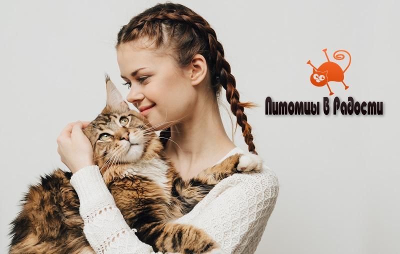 Кошка и хозяин