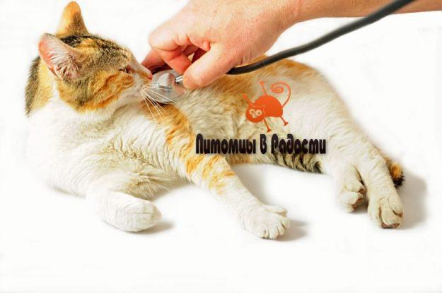 Распространённые заболевания кошек и сопутствующие симптомы