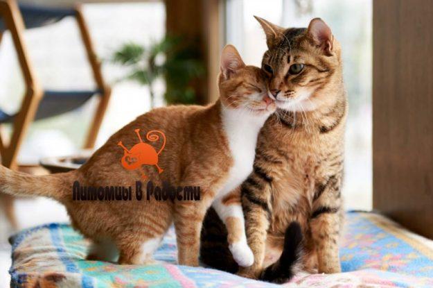 Как подружить двух кошек дома?