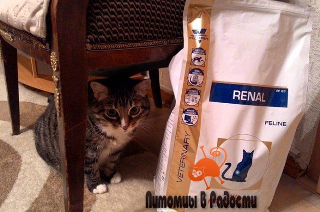 Диетотерапия кошки при заболеваниях почек