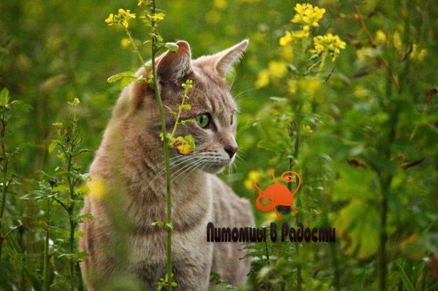 Владельцам кошек: чек-лист при вывозе питомца на природу
